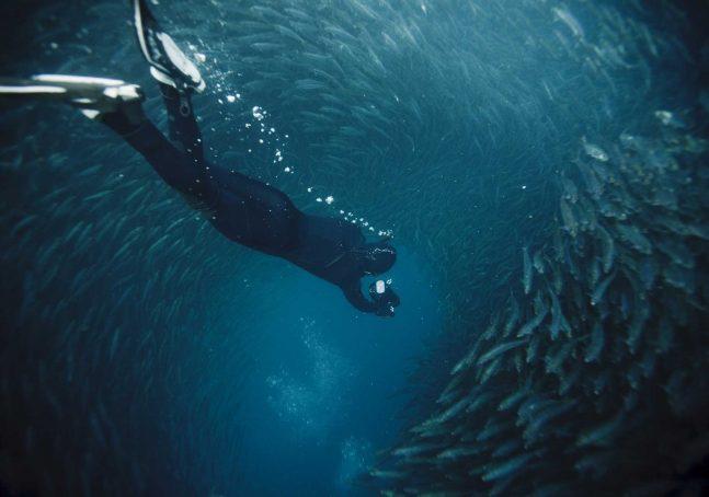 simsi-attività-subacquea
