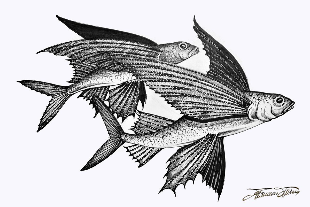 Fish Turano (10)